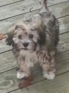 Meet Malcolm!